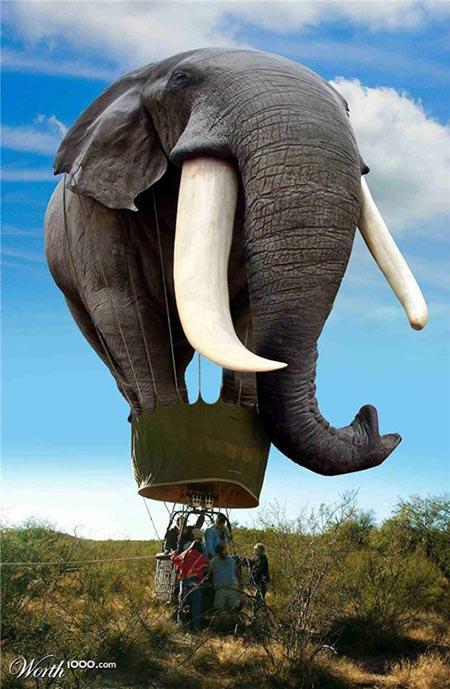 大象创意设计图